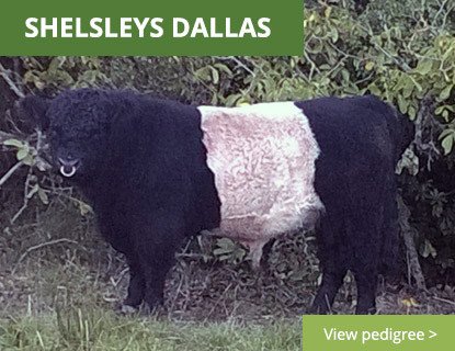 Shelsleys Dallas