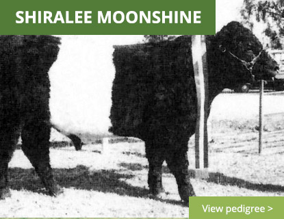 Shiralee Moonshine